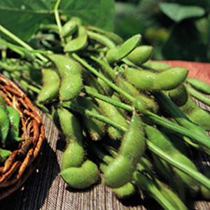 枝付きだだちゃ豆