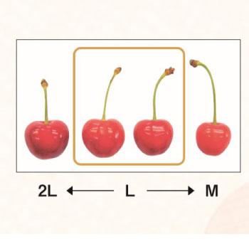さくらんぼの粒の大きさ
