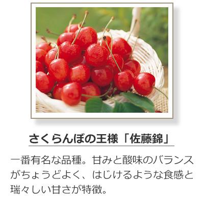 さくらんぼの品種-佐藤錦