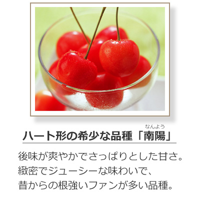 さくらんぼの品種-南陽