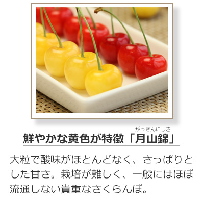 さくらんぼの品種-月山錦