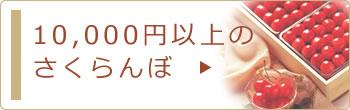 10,000円以上のさくらんぼ