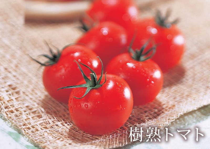 樹熟トマト