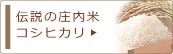 伝説の庄内米コシヒカリ