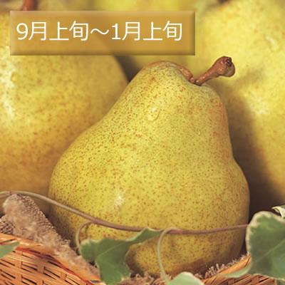 山形の洋梨